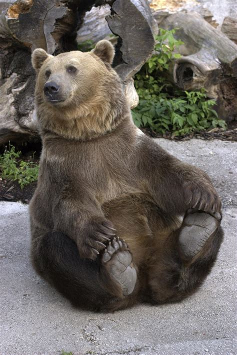 Incredibly Brilliant Facts About Grizzly Bears