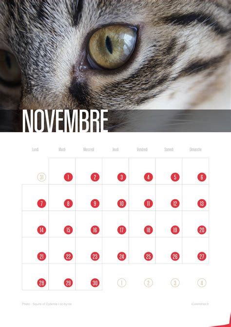 Calendriers Chats de Chatons 2016 - iCalendrier