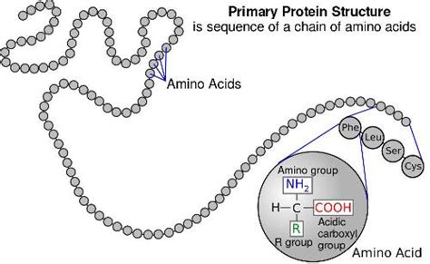 """Copy of """"Protein synthesis"""""""